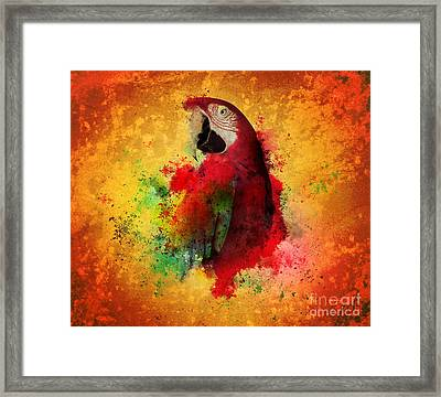 Paint Splatters Of Maccaw Parrot Framed Print by Angela Waye