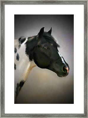 Paint Stallion Framed Print by Posey Clements