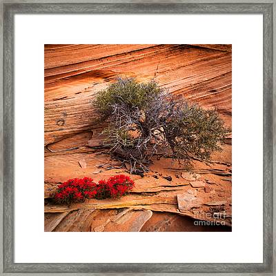 Paintbrush And Juniper Framed Print