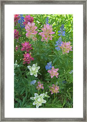 Paintbrush And Lupine, Alta Ski Resort Framed Print