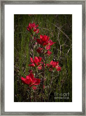 Paintbrush Framed Print by Jim McCain