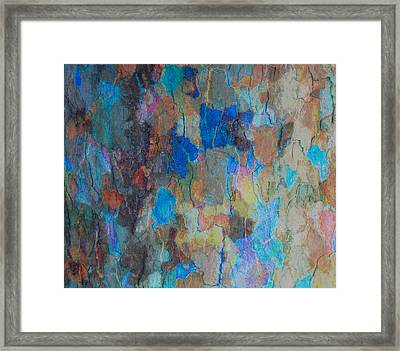 Painted Bark Framed Print by Stephanie Grant