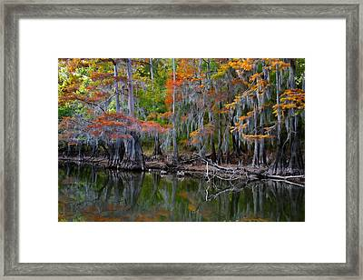Painted Bayou Framed Print by Lana Trussell