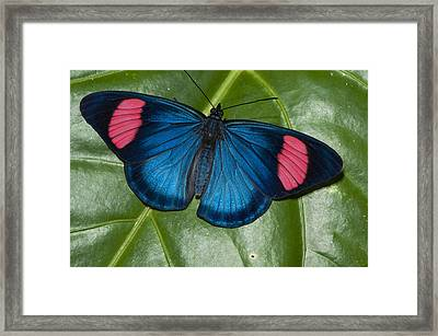 Painted Beauty Yasuni Ecuador Framed Print