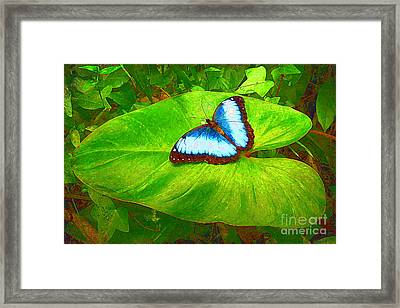 Painted Blue Morpho Framed Print
