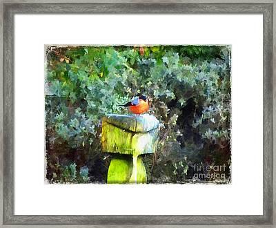 Painted Bullfinch S1 Framed Print