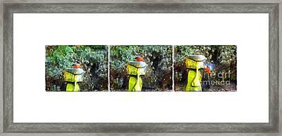 Painted Bullfinch Trio Framed Print