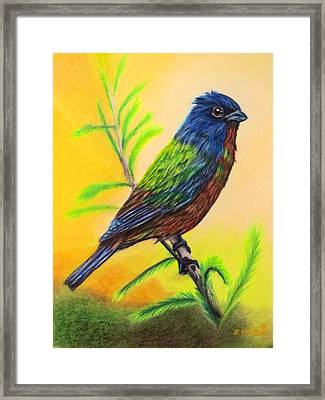 Painted Bunting Bird Framed Print