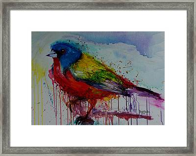 Painted Bunting Framed Print by Isabel Salvador