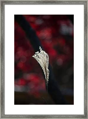 Painted By Light Framed Print