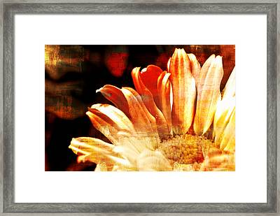 Painted Daisy Framed Print by Kelly Nowak