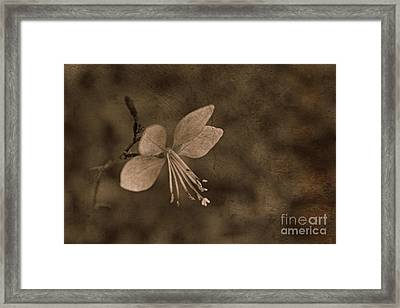Painted Delight Framed Print by Clare Bevan
