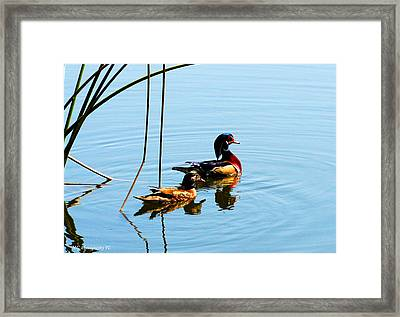 Framed Print featuring the photograph Painted Ducks by Marty Gayler