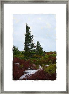 Painted Flagstaff Framed Print by Diana Boyd