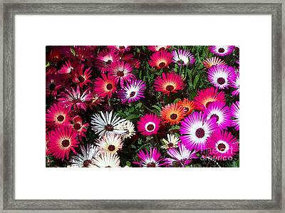 Painted Flowers Framed Print by Chalet Roome-Rigdon