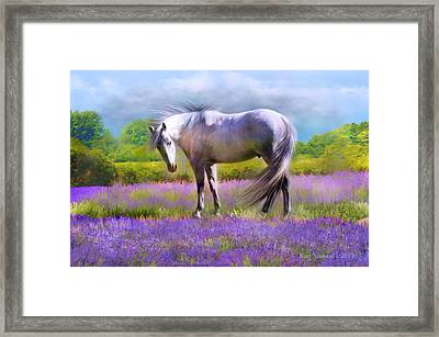 Painted For Lavender Framed Print