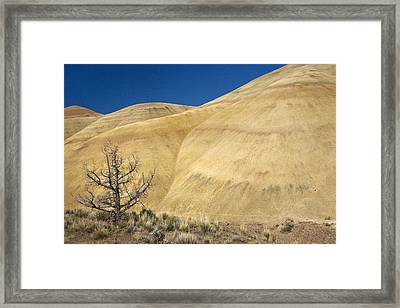 Framed Print featuring the photograph Painted Hills Tree by Sonya Lang