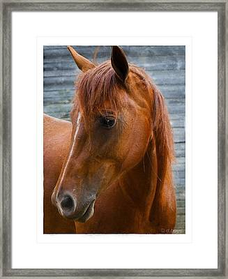 Painted Horse Framed Print by Diana Boyd