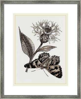 Painted Lady And Alpine Bluebottle Framed Print by Litz Collection