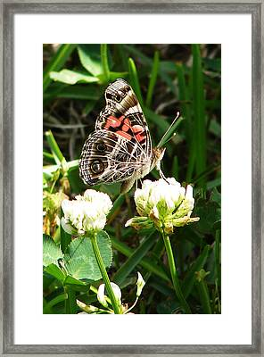 Painted Lady Butterfly 					 Framed Print by Ella Char