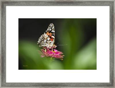 Painted Lady Butterfly At Rest Framed Print by Christina Rollo
