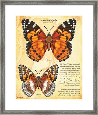 Painted Lady Butterfly Framed Print by Tammy Yee