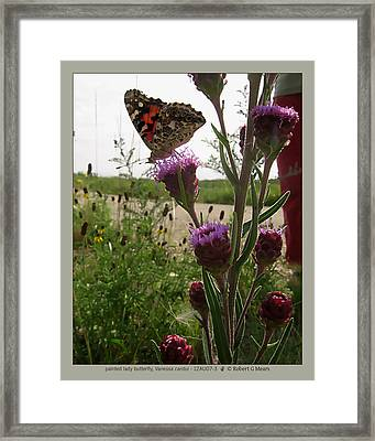 painted lady butterfly - Vanessa cardui - 12AU07-3 Framed Print by Robert G Mears