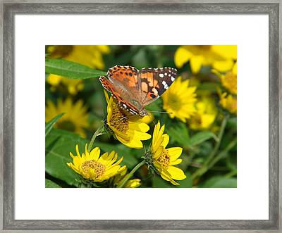 Framed Print featuring the photograph Painted Lady by James Peterson