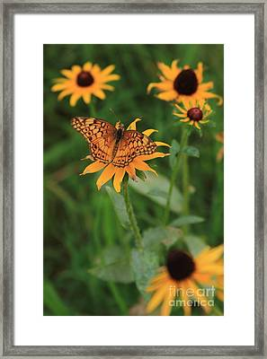 Painted Lady With Friends Framed Print by Reid Callaway