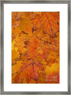Framed Print featuring the photograph Painted Leaves Of Autumn by Linda Shafer