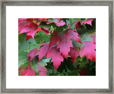 Painted Leaves Framed Print
