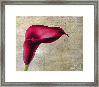 Painted Lilly Framed Print by Darren Fisher