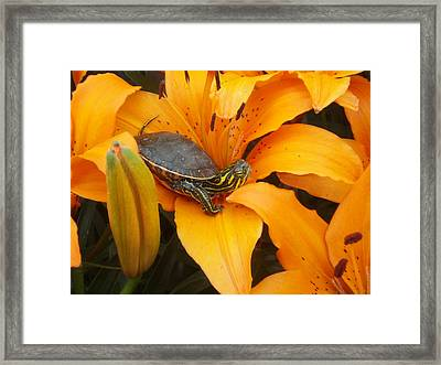 Painted Lilly Framed Print