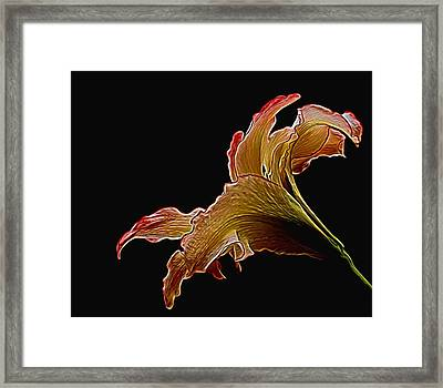 Painted Lily Framed Print by Judy Vincent