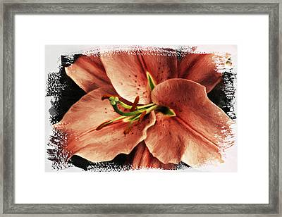 Painted Lily Framed Print