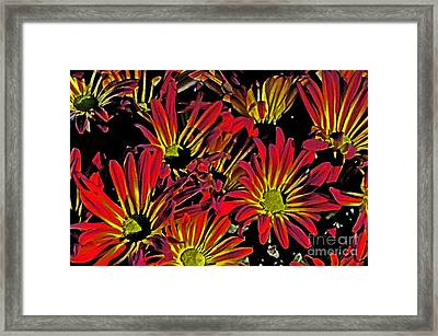 Painted Mums Framed Print by Judy Wolinsky