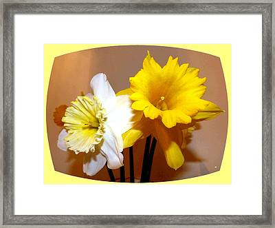 Painted Okanagan Daffodils Framed Print by Will Borden