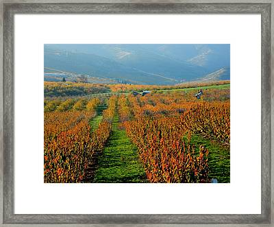 Painted Orchard Framed Print