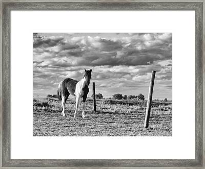 Painted Pony Framed Print by Tom Druin