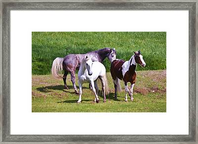 Painted Pretty Horses Framed Print by Athena Mckinzie