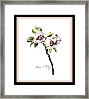 Painted Quince Flower Framed Print by Marsha Heiken