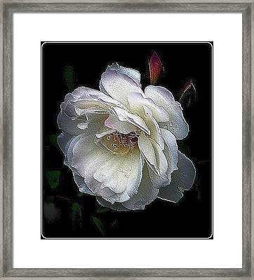Painted Rose Framed Print