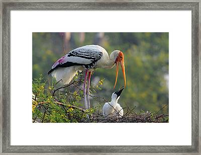 Painted Stork & Youn One,keoladeo Framed Print