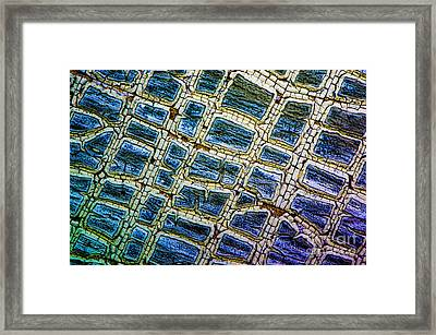 Painted Streets Number 1 Framed Print