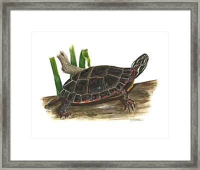 Painted Turtle Framed Print by Cindy Hitchcock