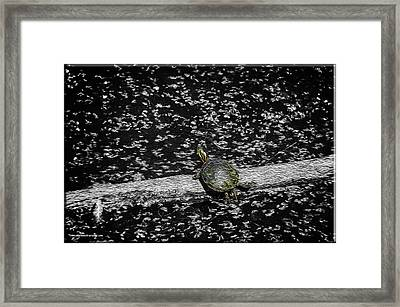 Painted Turtle In A Monochrome World Framed Print by LeeAnn McLaneGoetz McLaneGoetzStudioLLCcom