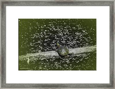 Painted Turtle Sleeping Like A Log Framed Print