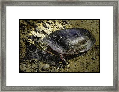 Painted Turtle Travels Framed Print