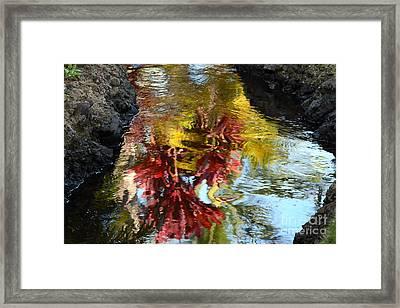 Painted Water Framed Print by Jennifer Apffel