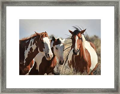 Painted Wild Horses Framed Print by Athena Mckinzie